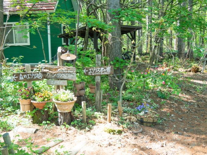 """""""奇形のオオバナノエンレイソウ""""今年も元気に咲き始めました。_f0276498_16593307.jpg"""