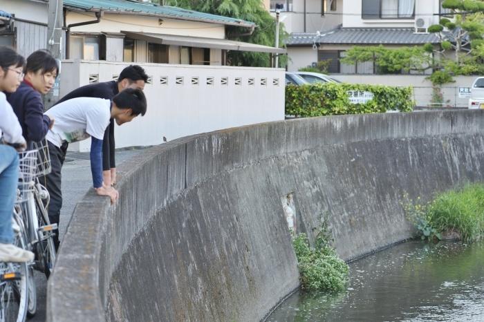 お散歩中     <   カルガモ家族   >_a0140000_23373073.jpg