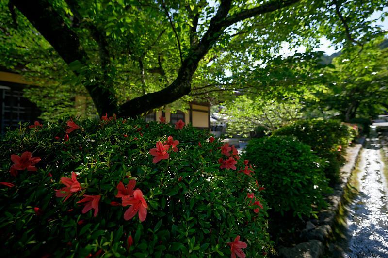 真緑巡り・南禅寺_f0032011_19384317.jpg