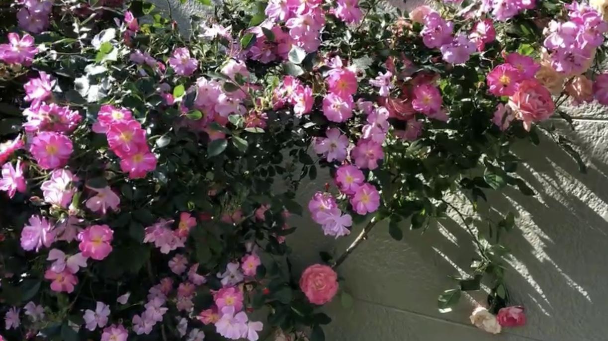コロナカ★5月_f0115311_13501434.jpeg