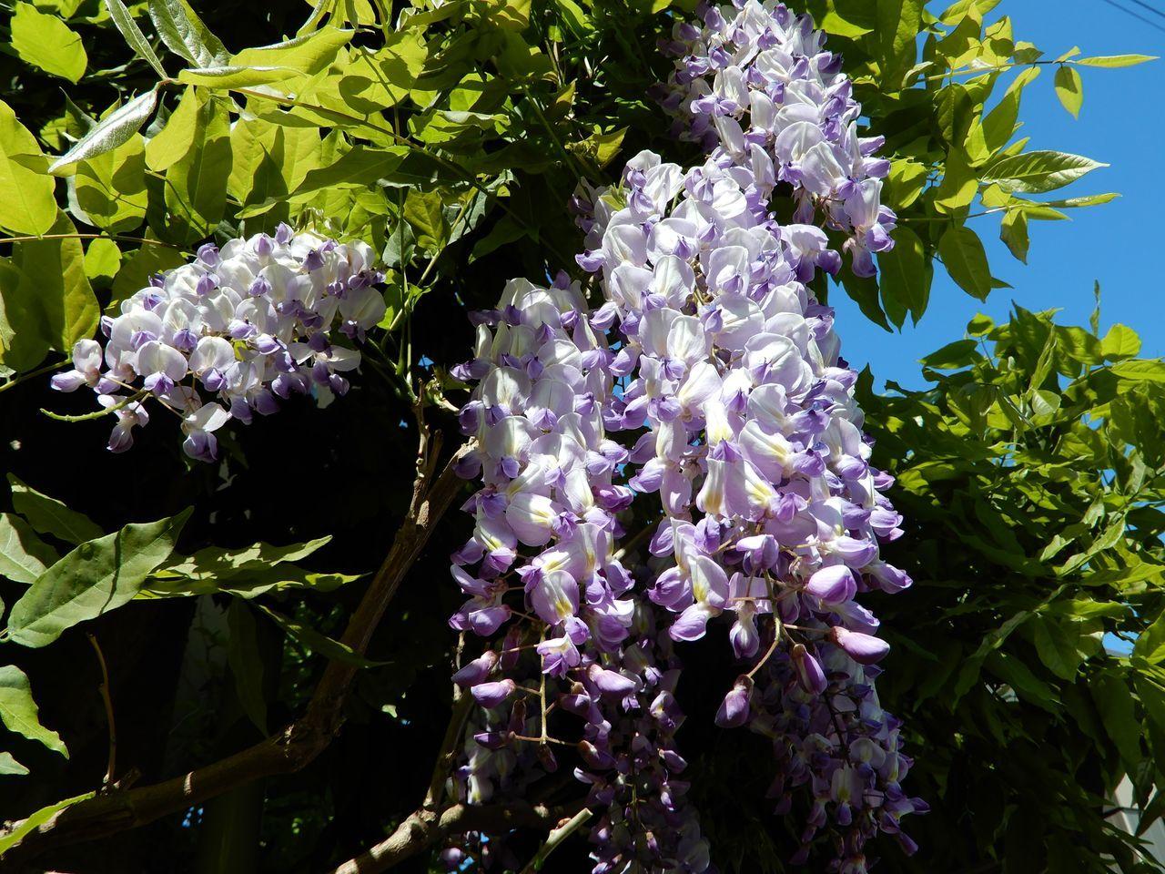 これから咲く花も_c0025115_23280532.jpg