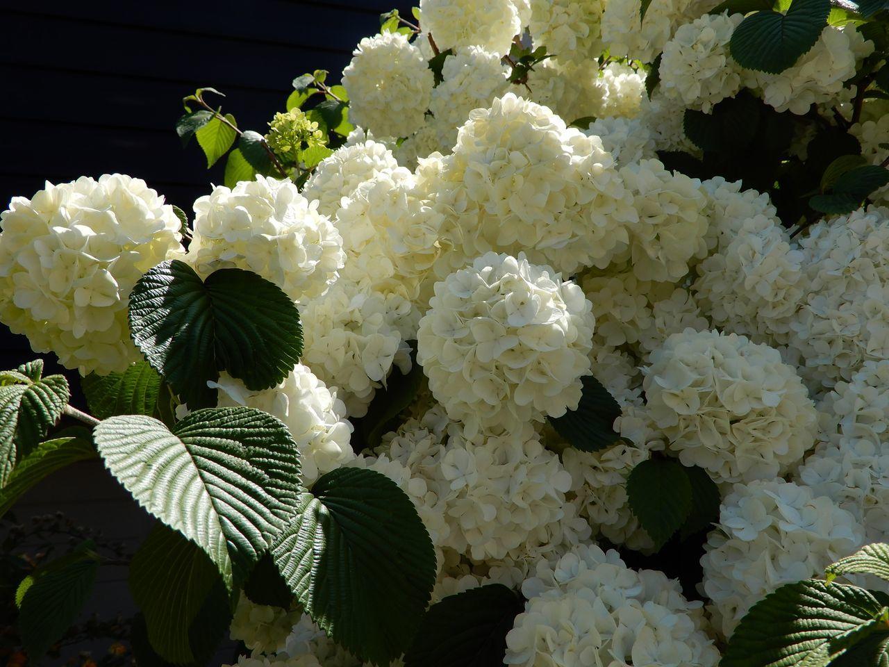 これから咲く花も_c0025115_23285584.jpg