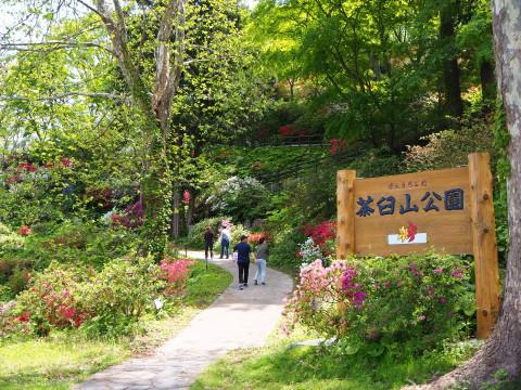 茶臼山公園のつつじ(大鰐町)*2020.05.26_b0147224_18474353.jpg