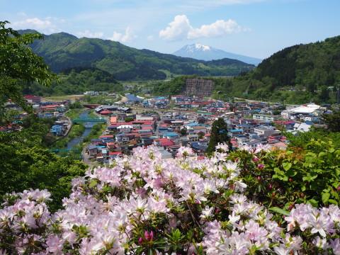 茶臼山公園のつつじ(大鰐町)*2020.05.26_b0147224_18512266.jpg