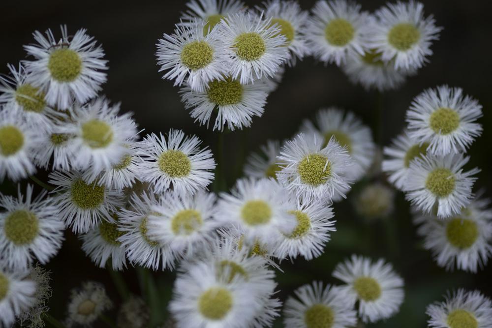 白い花_d0265224_17561676.jpg