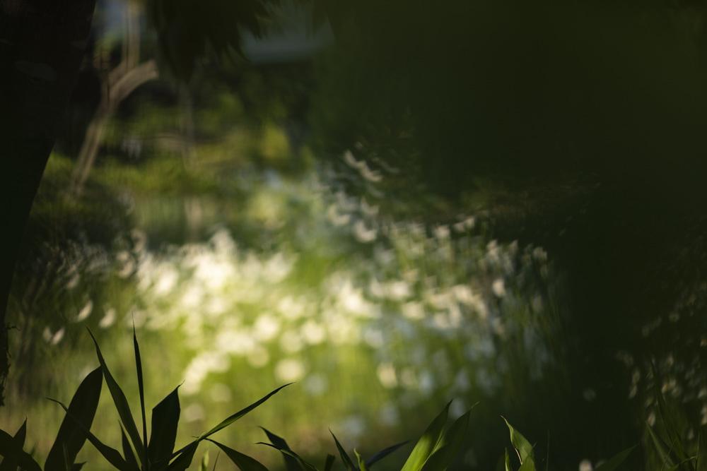 白い花_d0265224_17562248.jpg