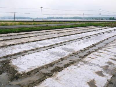 無農薬栽培の米粉、発芽玄米、雑穀米大好評発売中!「健康農園」さんの令和2年度の米作りがスタート!_a0254656_19235407.jpg