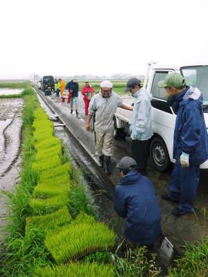 無農薬栽培の米粉、発芽玄米、雑穀米大好評発売中!「健康農園」さんの令和2年度の米作りがスタート!_a0254656_19400387.jpg