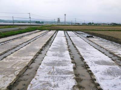 無農薬栽培の米粉、発芽玄米、雑穀米大好評発売中!「健康農園」さんの令和2年度の米作りがスタート!_a0254656_19511656.jpg