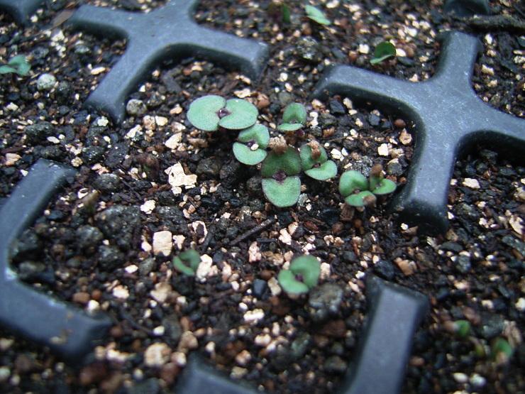 やっと芽が出てきた_d0225575_18220194.jpg
