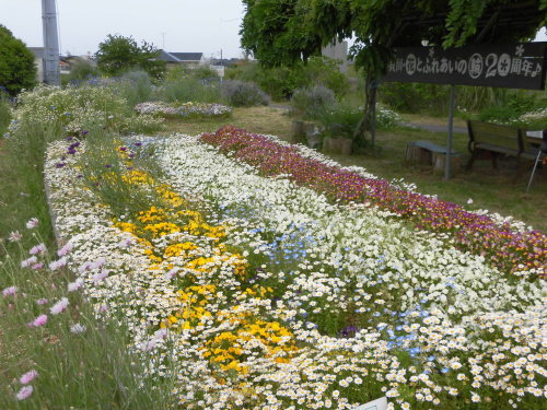 「花と風の丘」ある日の風景_d0257693_13164270.jpg