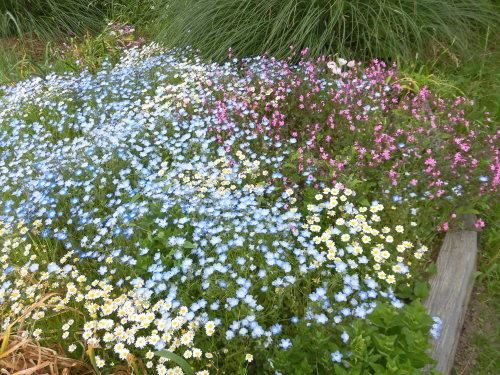 「花と風の丘」ある日の風景_d0257693_13173376.jpg