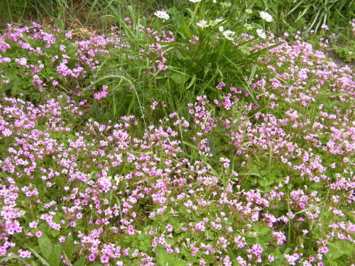 「花と風の丘」ある日の風景_d0257693_13175001.jpg
