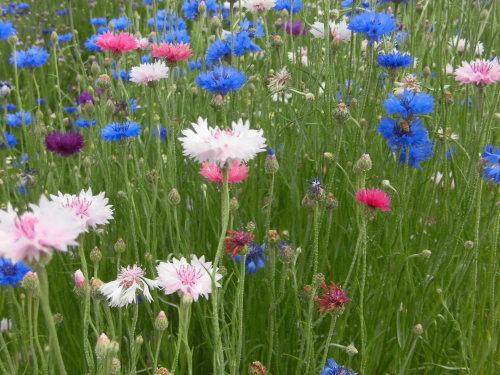 「花と風の丘」ある日の風景_d0257693_13180133.jpg