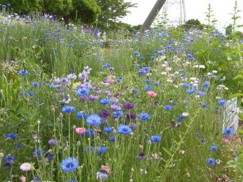 「花と風の丘」ある日の風景_d0257693_13181179.jpg