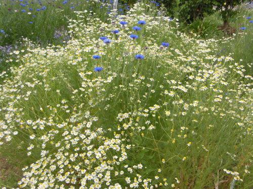 「花と風の丘」ある日の風景_d0257693_13181826.jpg