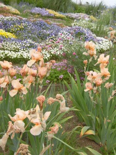 「花と風の丘」ある日の風景_d0257693_13221759.jpg