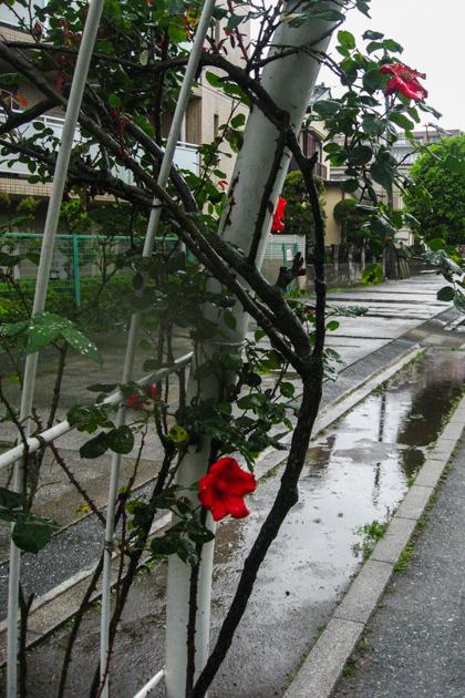 2020.06.01 朝から雨_a0390712_21465940.jpg