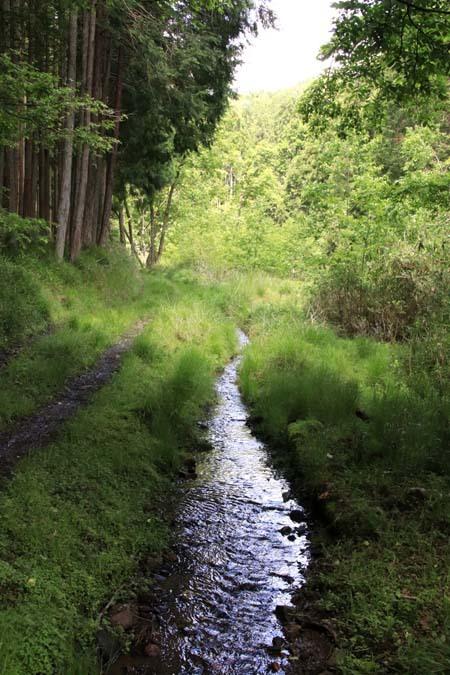 菜園から坂原峠への道_e0048413_23131704.jpg
