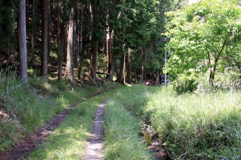 菜園から坂原峠への道_e0048413_23132281.jpg
