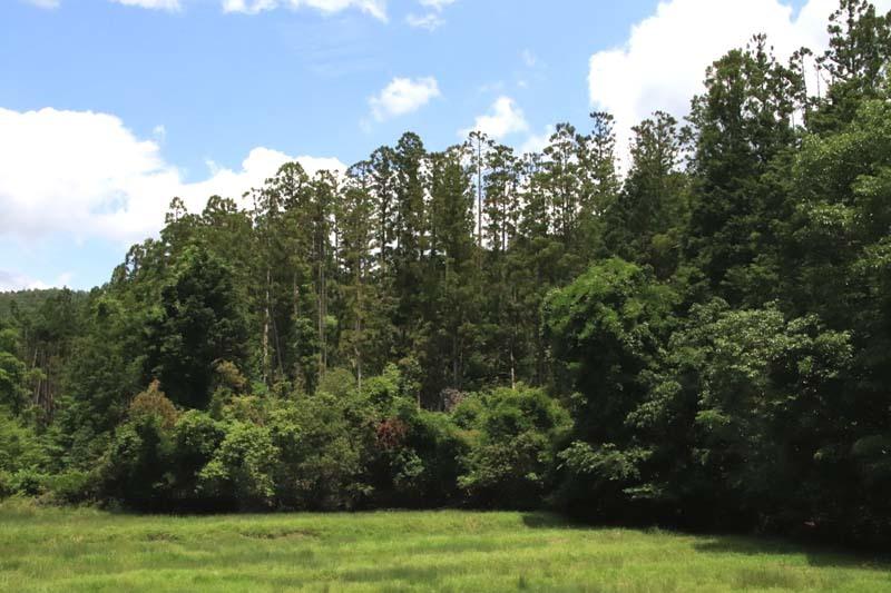 菜園から坂原峠への道_e0048413_23133197.jpg