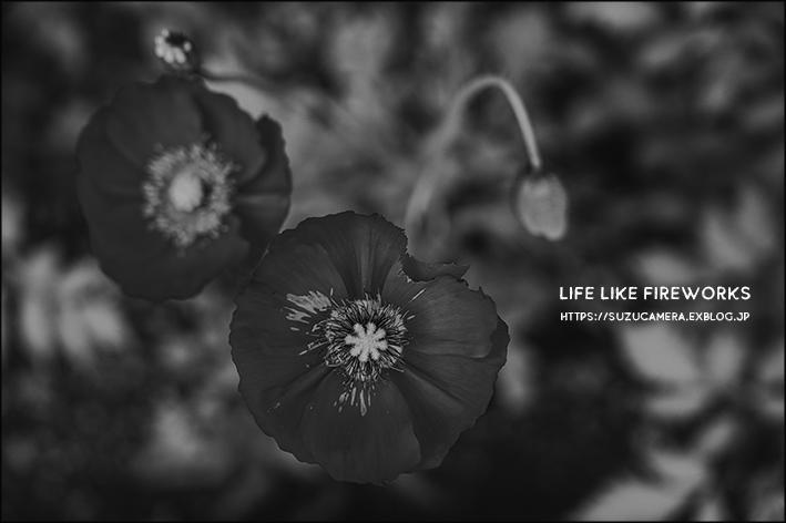 Life Like Fireworks_f0100215_22585240.jpg