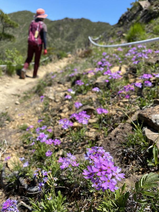 """2020年5月 『初めての日高アポイ岳、花の名山』 May 2020 \""""The First Visit of Mt Apoi\""""_c0219616_21491426.jpg"""