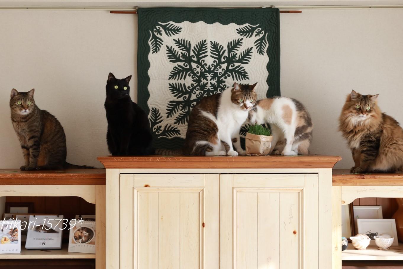 横たわったトーテムポールで「猫まる大賞」いただきました_e0364523_16145476.jpg