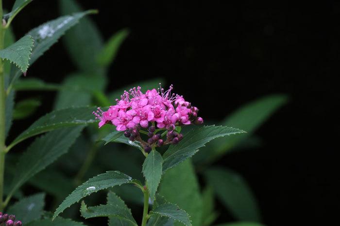 庭の花   <6/1>_c0404426_07371398.jpg