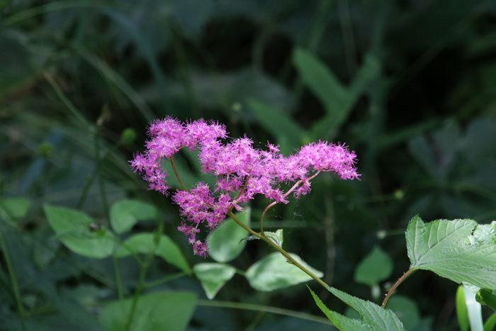 庭の花   <6/1>_c0404426_07381599.jpg