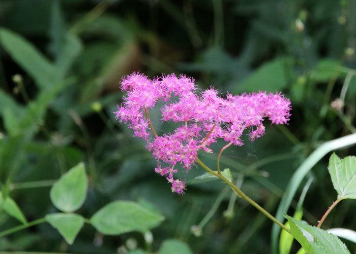 庭の花   <6/1>_c0404426_07383780.jpg