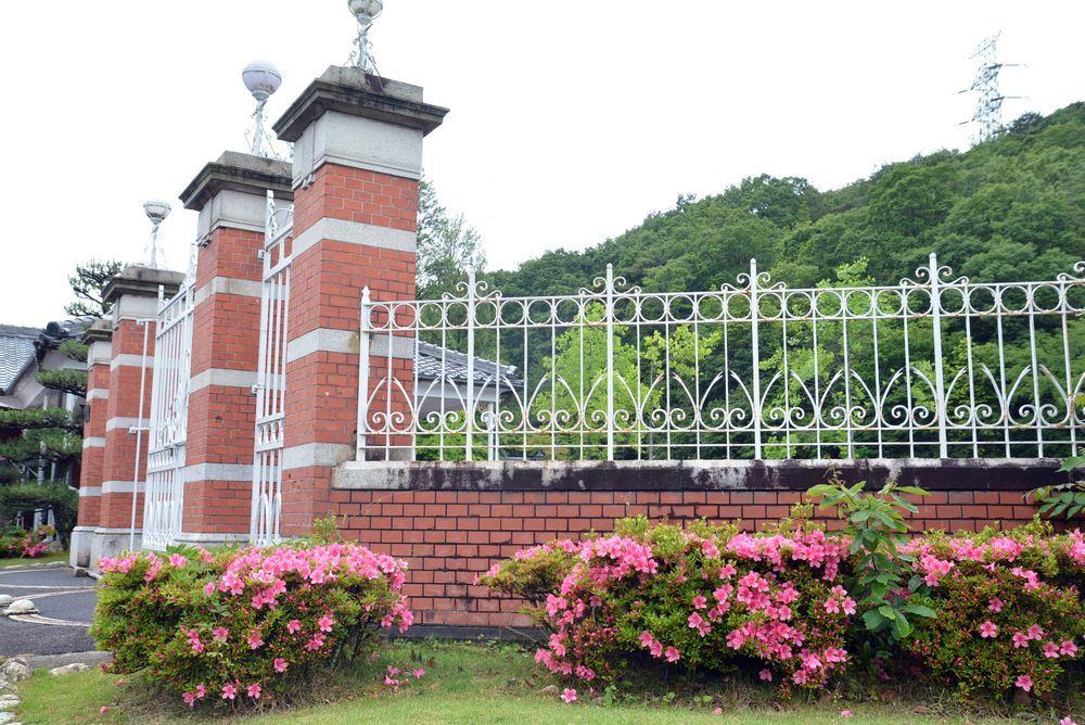5月末に咲くサツキの花 正門周辺_e0373930_19504609.jpg
