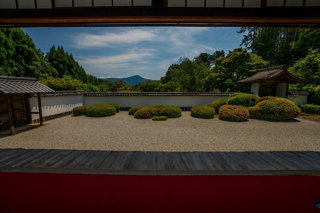 正伝寺のサツキ_e0363038_11135770.jpg