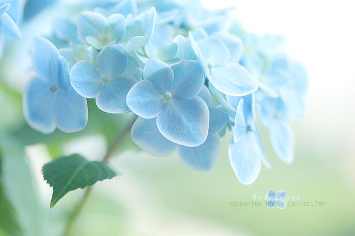 Happy*フォトレッスン_b0049843_7591445.jpg