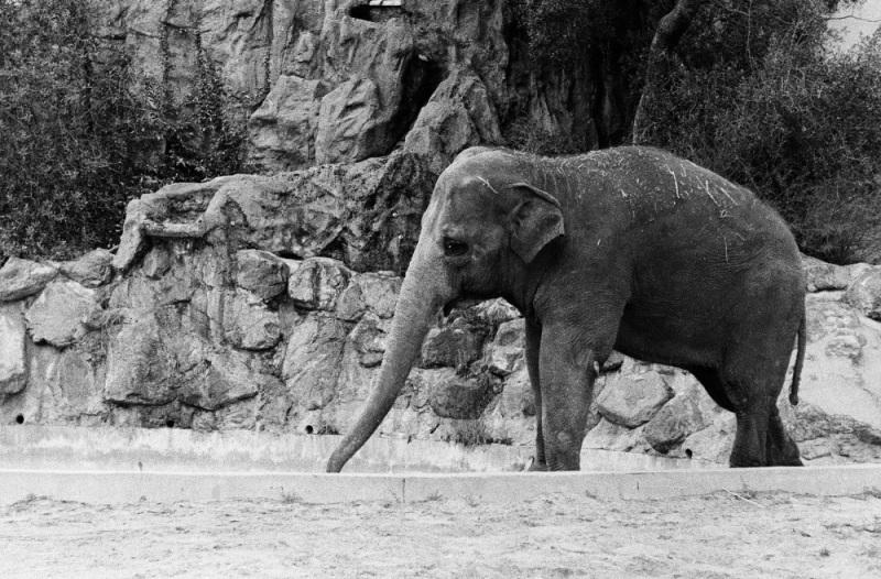 1997年のサンディエゴ動物園にいたゾウはまだいる?_c0060143_21401726.jpg
