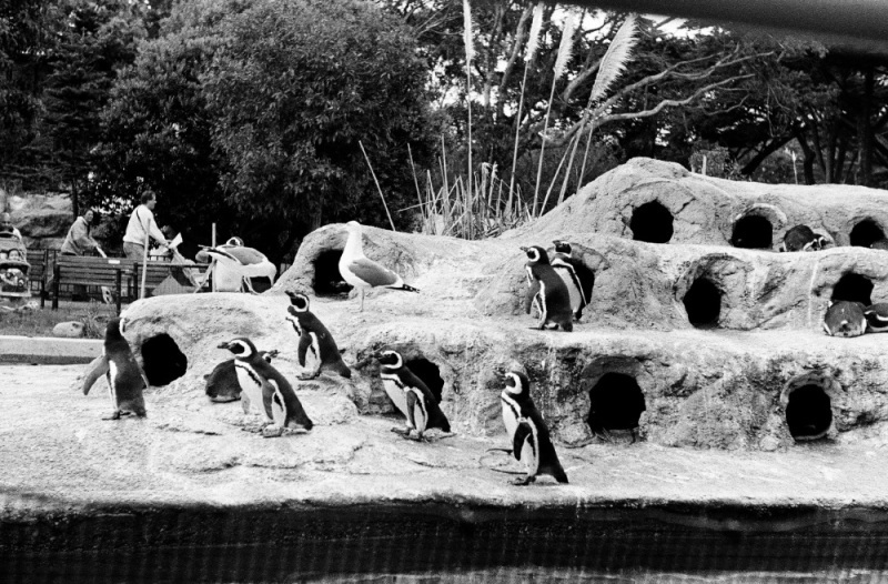 1997年のサンディエゴ動物園にいたゾウはまだいる?_c0060143_22154468.jpg