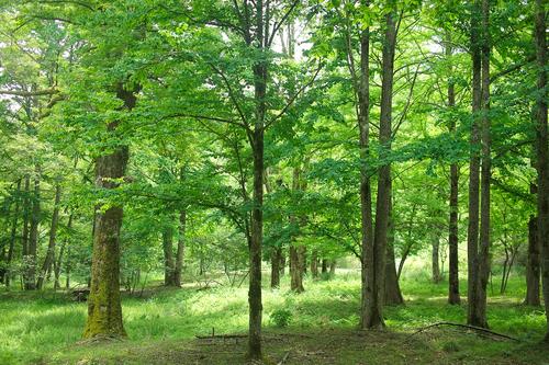 森林公園「くつきの森」と上針畑・小入谷のカキツバタ再生_d0005250_1716827.jpg