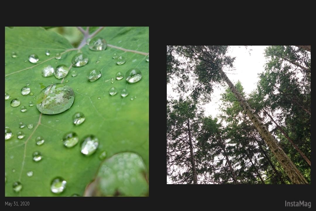 森林浴_b0328361_22195127.jpg