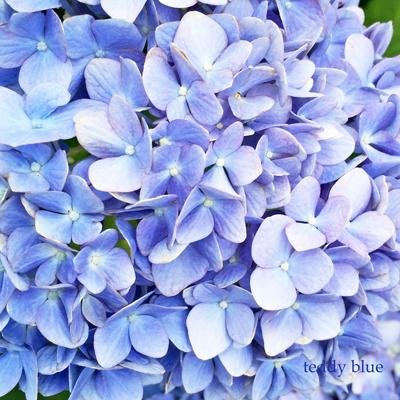 Hello June!  ハロージューン!_e0253364_22300607.jpg