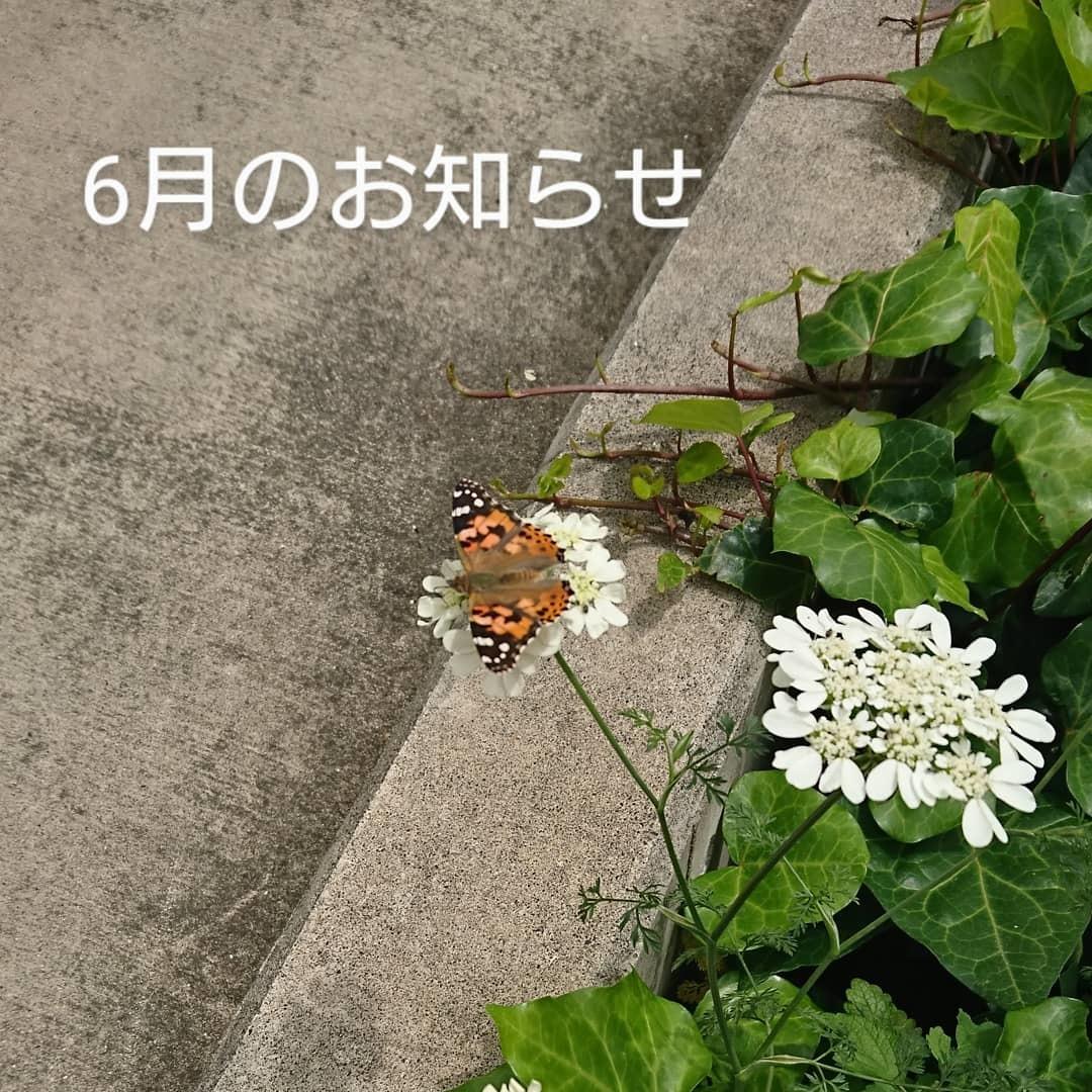 6月のお知らせ_b0304672_11271004.jpg