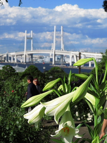 日本に降る雨にオピニオンはあるか。_b0141773_21460664.jpg