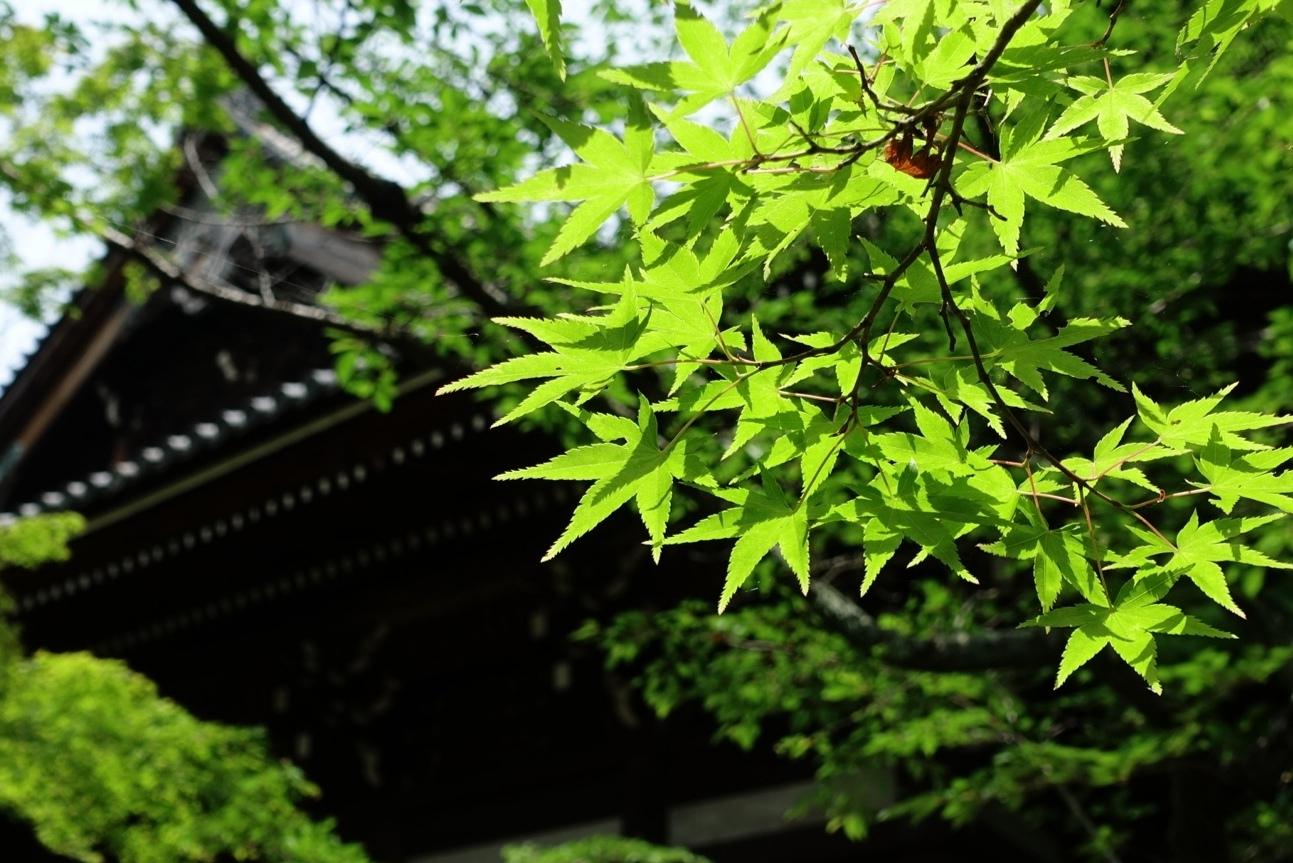 日本に降る雨にオピニオンはあるか。_b0141773_21505168.jpg