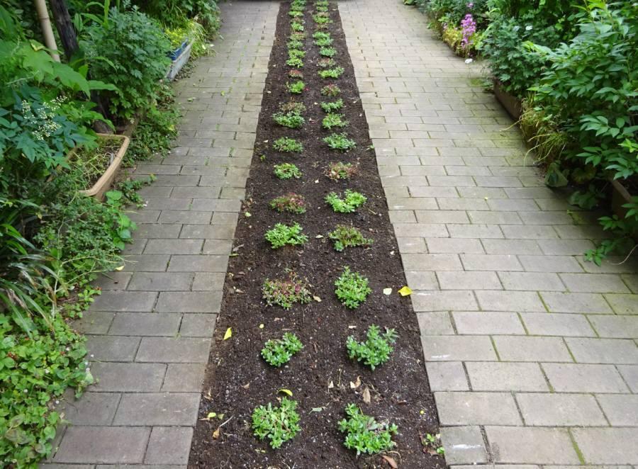 アプローチ花壇の植替え_f0059673_09491347.jpg