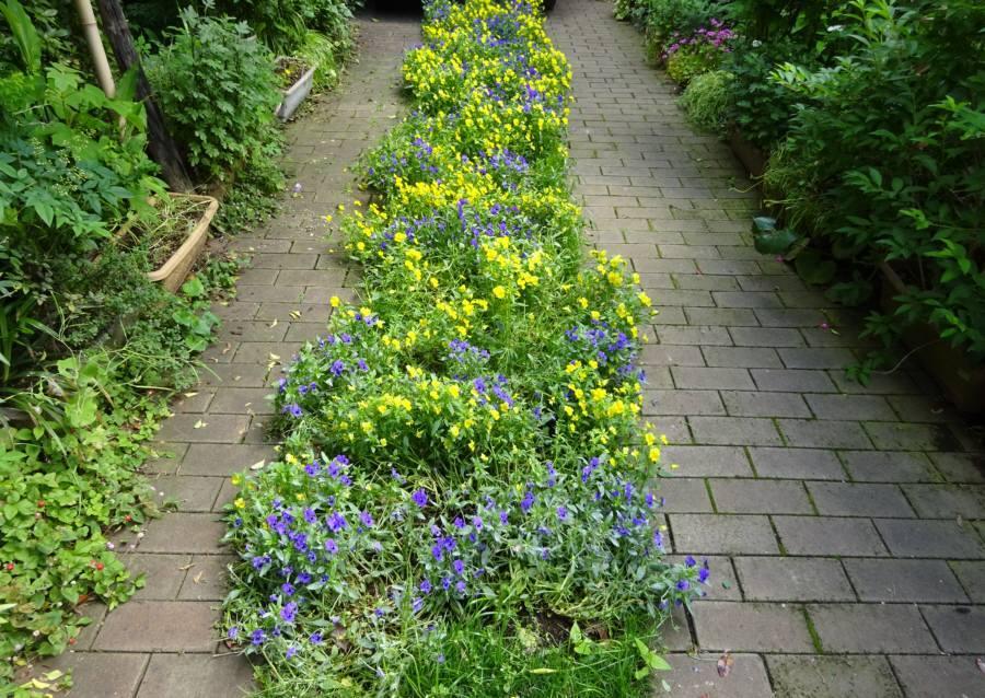 アプローチ花壇の植替え_f0059673_09493700.jpg