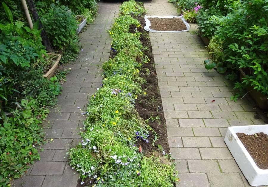 アプローチ花壇の植替え_f0059673_09495161.jpg
