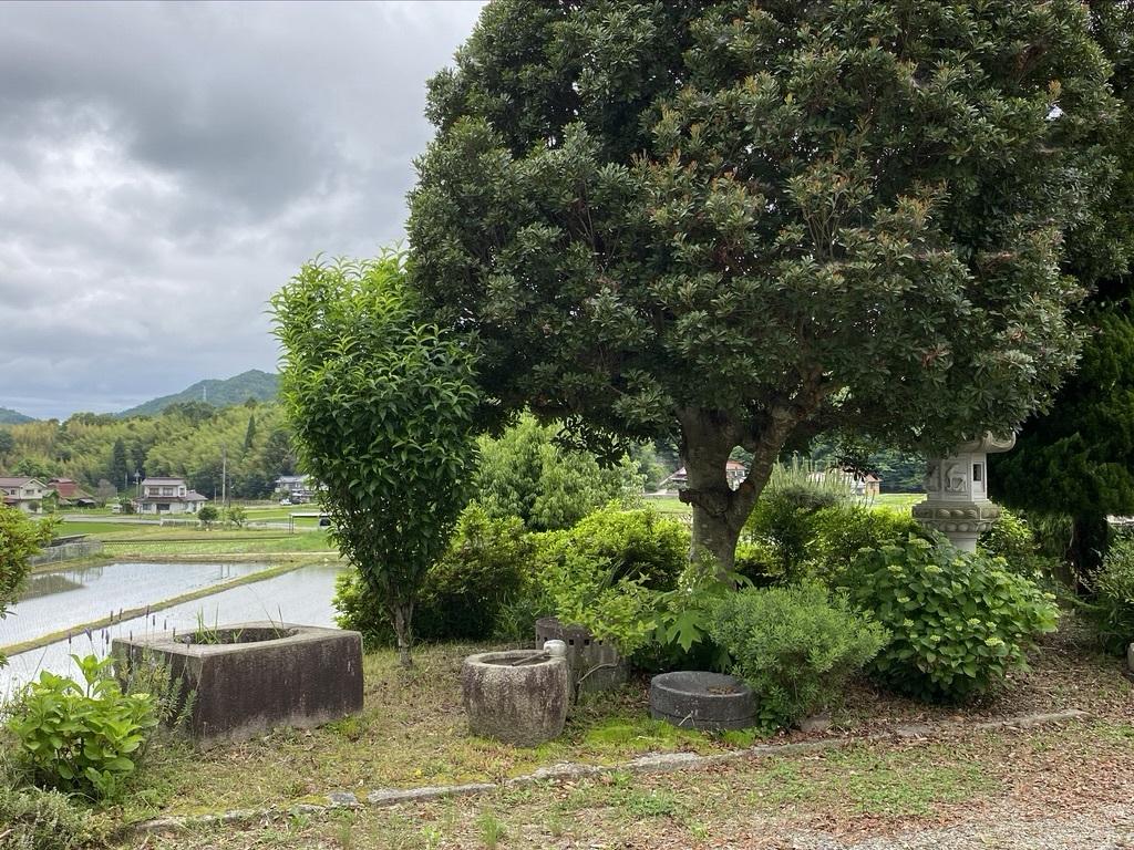 ジューンベリーと初夏の庭木たち_c0334574_19103925.jpeg
