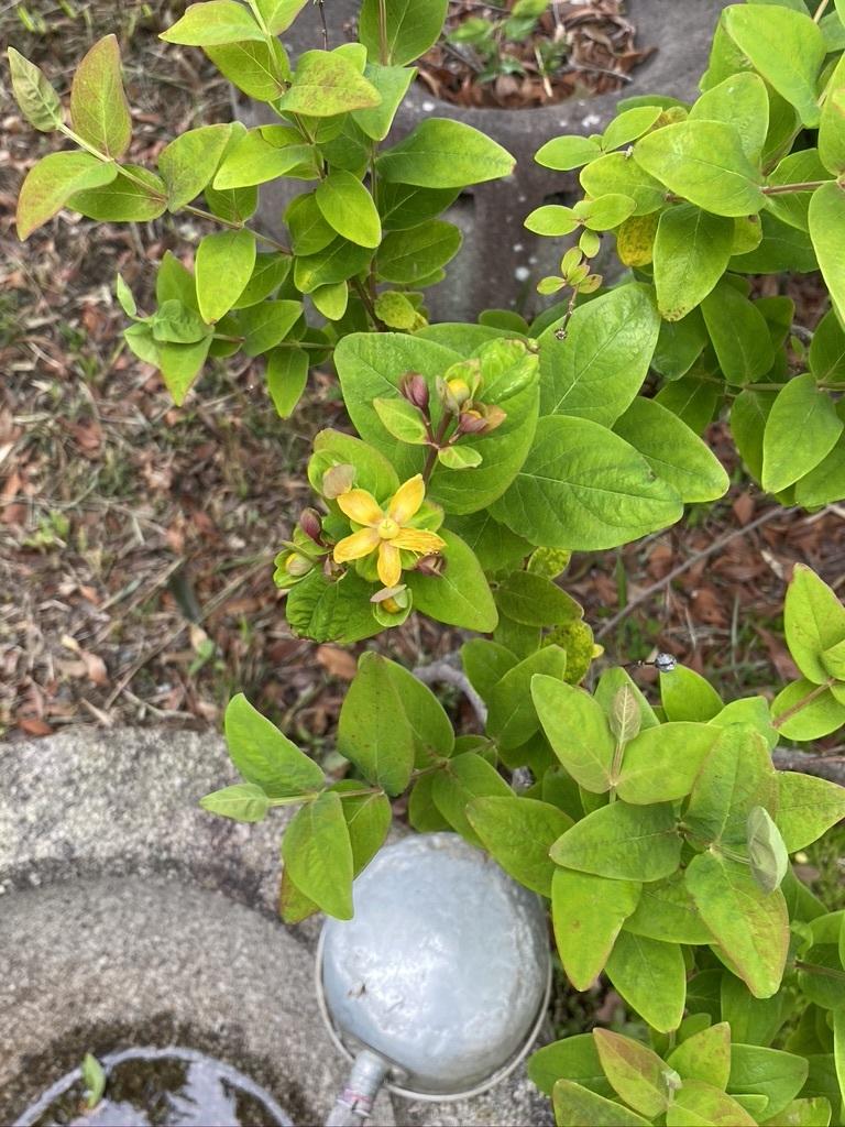 ジューンベリーと初夏の庭木たち_c0334574_19112907.jpeg