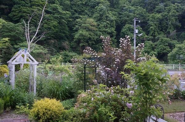 樹木のお花など_e0365880_19221849.jpg