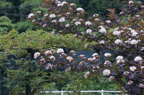 樹木のお花など_e0365880_19222939.jpg