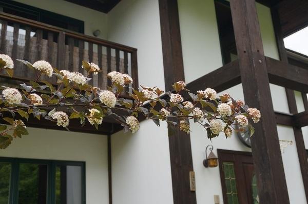 樹木のお花など_e0365880_19224657.jpg